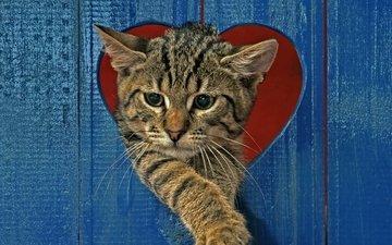 кот, кошка, забор, серый, сердце, полосатый