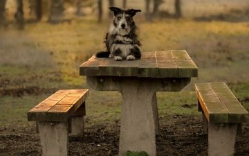 взгляд, стол, собака, скамейки, друг, терьер