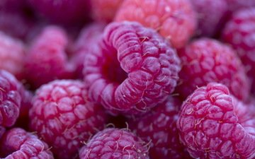 macro, raspberry, berries