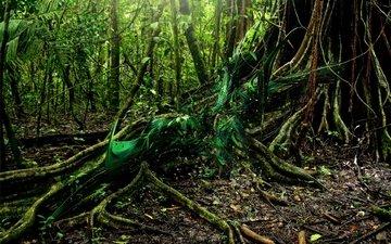 дерево, лес, корни, грин, дерево