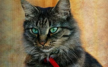 кот, монитор, птичка