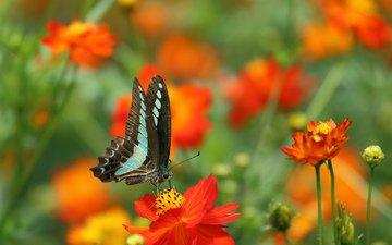 цветы, природа, бабочка, крылья