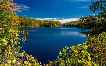 деревья, озеро, ветки, осень, штат нью-йорк, rockwood lake, adirondack park, озеро роквуд, парк адирондак, нью - йорк