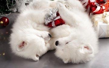 новый год, подарки, пол, пара, белые, спят, щенки, два, праздник, рождество, двое, собаки, коробки, мило, самоед