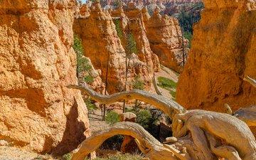 каньон, сша, штат юта, брайс каньон национальный парк