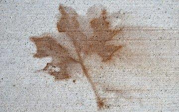 рисунок, текстура, фон, стена, лист