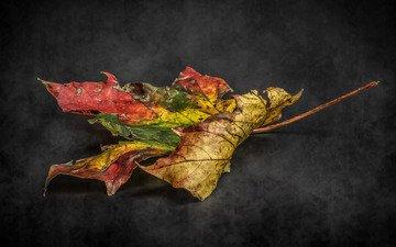 природа, фон, осень, лист, етекстура, colour, decay