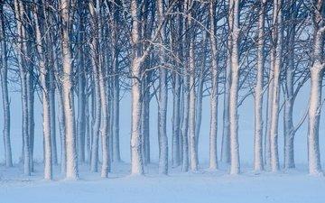деревья, снег, зима, швеция, швеции, готланд