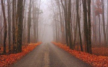 дорога, лес, осень