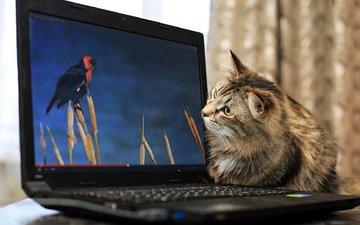 кот, монитор, птичка, котяра