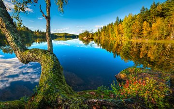озеро, дерево, лес, отражение, норвегия, норвегии, бускеруд, sætre, хурум