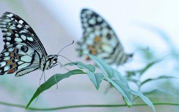 трава, насекомое, бабочка, крылья