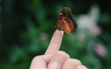 рука, насекомое, бабочка, пальцы