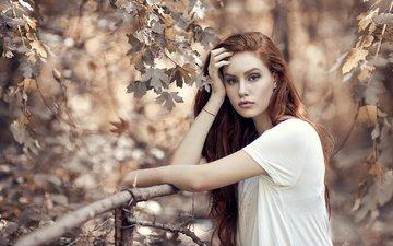 природа, листья, девушка, ветки, взгляд, осень, рыжая, клен, алессандро ди чикко