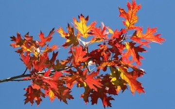 небо, ветка, листья, осень, багрянец