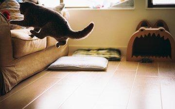 кот, кошка, комната, пол, диван, прыгает