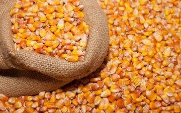 мешок, кукуруза, бобы