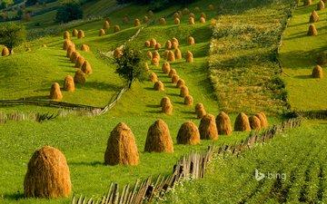 холмы, пейзаж, сено, зелёная трава, буковина, стога сена