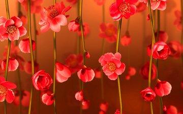 ветка, цветок, лето, лепестки, коллаж, открытка