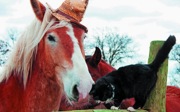 horse, animals, cat, black, the fence, hat, friendship, log, friends, fondled