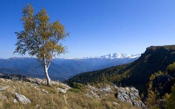 горы, дерево, пейзаж