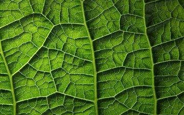 зелёный, лист, растение, листик, завод, грин