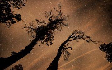 деревья, космос, звезды, пространство