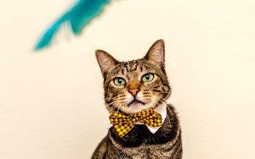животные, кот, бабочка, кошки, полосатый