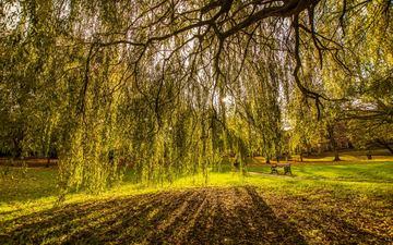 деревья, пейзаж, ветви, великобритания, осень, поляна, престон