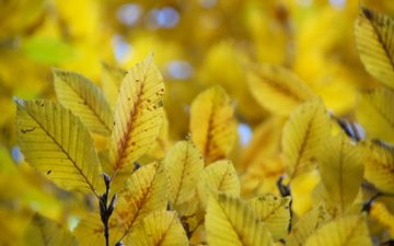 nature, leaves, autumn