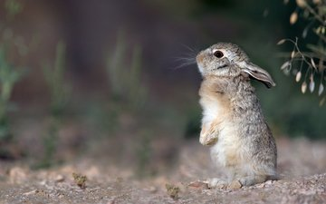 малыш, заяц, детеныш, стойка, зайчонок