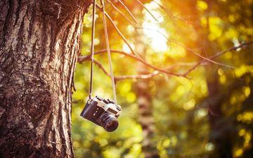 the sun, nature, tree, the camera, camera