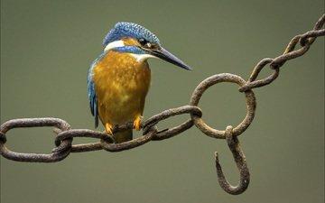 background, bird, chain, kingfisher, hook