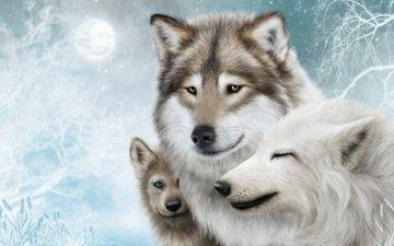 арт, хищники, волки