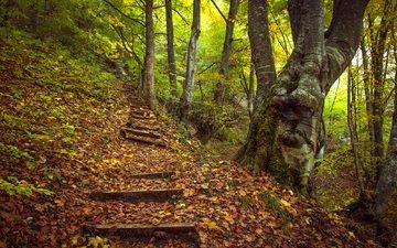 деревья, лес, пейзаж, осень, холм, ступени