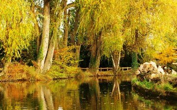деревья, пейзаж, парк, осень, пруд