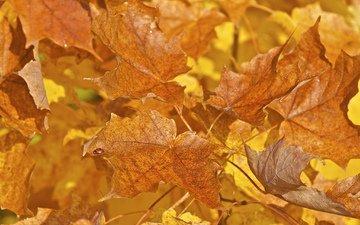 листья, макро, насекомое, краски, осень, божья коровка