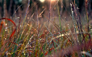 трава, природа, макро, роса