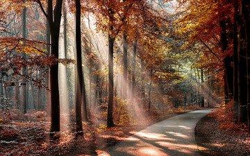 дорога, деревья, солнце, лес, листья, парк, осень, тени