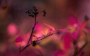 ветка, фон, осень, листья. природа