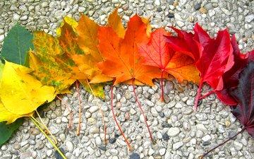 камни, листья, осень, радуга, клен