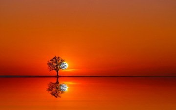 water, tree, sunset, reflection, landscape, orange sky