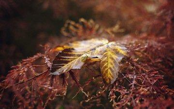 природа, растения, макро, фон, осень, лист, улитка
