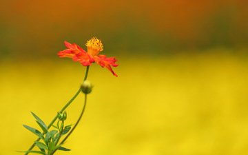 цветы, природа, растения