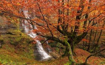 деревья, лес, водопад, осень, испания, бискайя, страна басков, природный парк горбеа