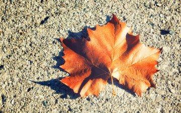 листок, осень, лист, клен