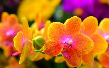 цветы, природа, макро, лепестки, растение, орхидея