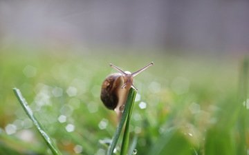 nature, background, snail