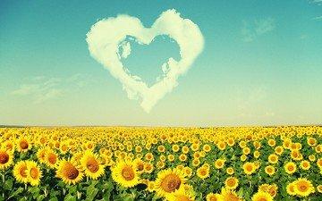 clouds, landscape, field, summer, heart, sunflowers