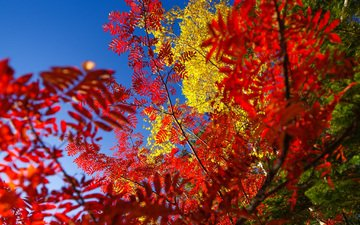 небо, дерево, листья, осень, багрянец